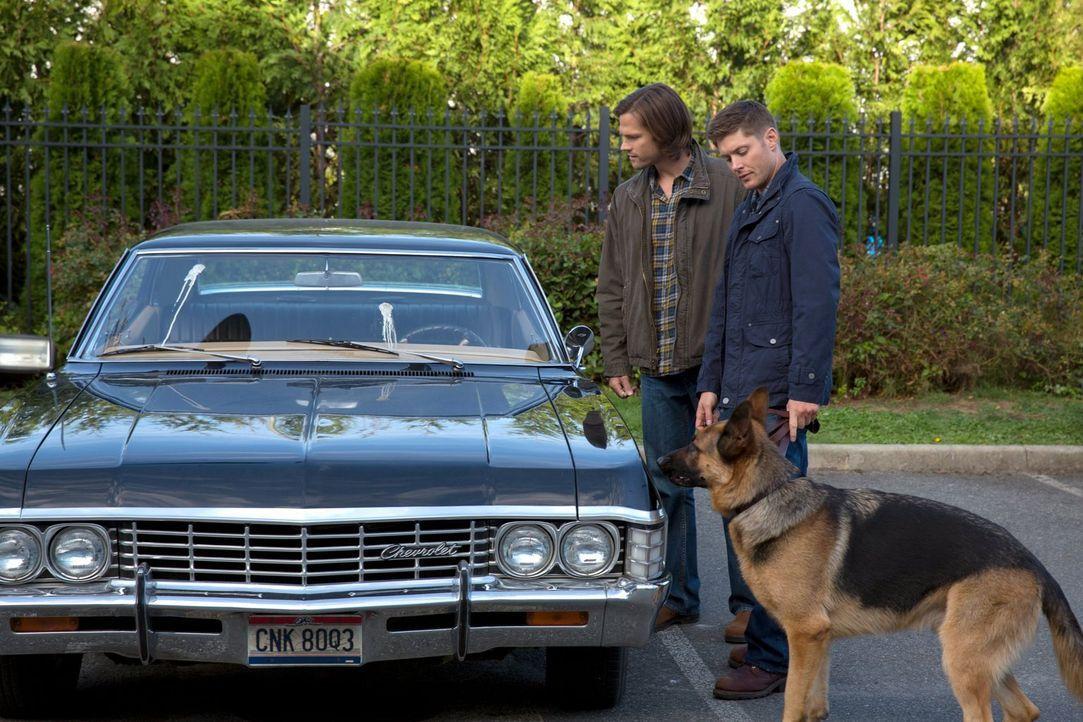 Wird es Sam (Jared Padalecki, l.) und Dean (Jensen Ackles, r.) gelingen, mit einem Hund zu kommunizieren? - Bildquelle: 2013 Warner Brothers
