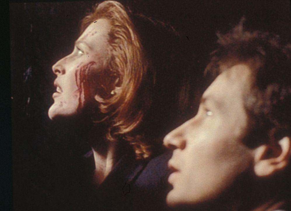 Scully (Gillian Anderson, l.) und Mulder (David Duchovny, r.) sind auf der Flucht vor Hunderten von Katzen, die durch den Fluch der Amaru-Urne zu re... - Bildquelle: TM +   2000 Twentieth Century Fox Film Corporation. All Rights Reserved.