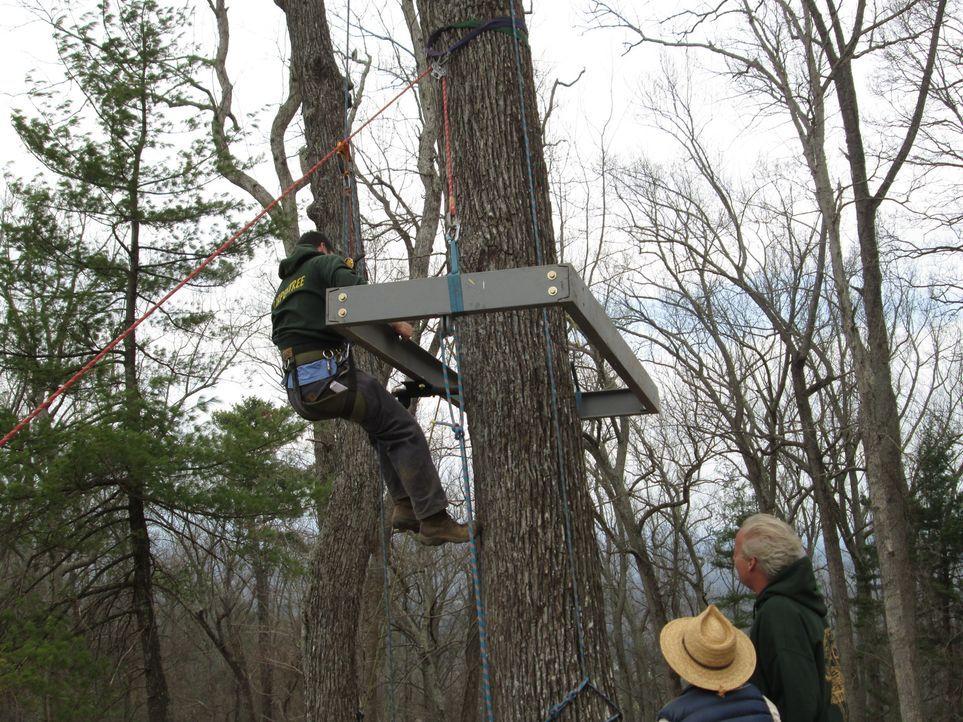 Eine neue holzige Herausforderung erwartet die Treehouse Guys in Asheville, wo sie ihren Kunden einen Baum-Palast in weißen Eichen bauen - ihre Kund... - Bildquelle: 2016,DIY Network/Scripps Networks, LLC. All Rights Reserved.