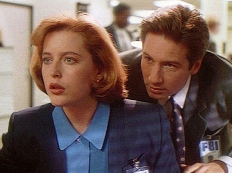 Die FBI-Agenten Dana Scully (Gillian Anderson, l.) und Fox Mulder (David Duchovny, r.) werden vom CIA angefordert, um bei der Lösung eines Falles vo... - Bildquelle: TM +   Twentieth Century Fox Film Corporation. All Rights Reserved.