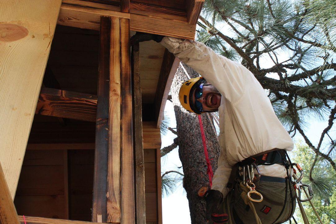 Für die Baumhaus-Helden geht es mal wieder hoch hinaus: In den Bäumen fühlen sie sich am wohlsten und zaubern für ein Pärchen aus Idaho ein kleines... - Bildquelle: 2016,DIY Network/Scripps Networks, LLC. All Rights Reserved