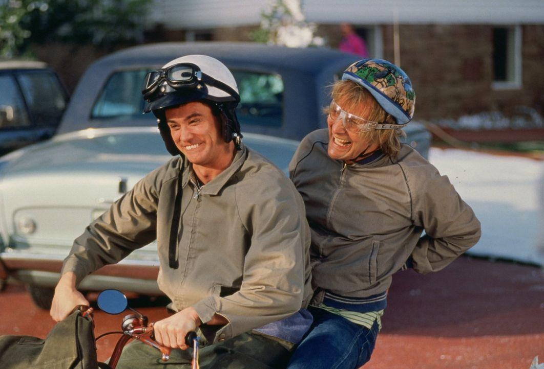 Harry (Jeff Daniels, r.) und Llyod (Jim Carrey, l.) sind auf der Suche nach ihrer Angebeteten ... - Bildquelle: Warner Bros.