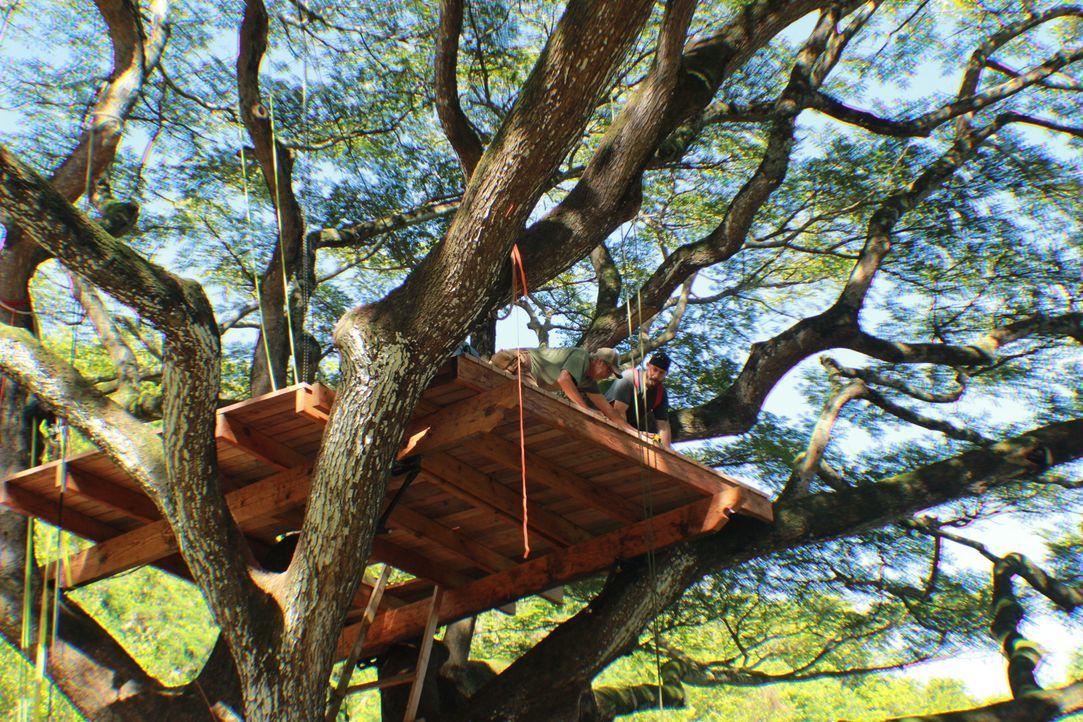 B'fer (l.) und Ka-V  (r.) müssen sich beeilen und das Baumhaus trotz Hawaiis täglicher Nachmittagsregenfälle zum Abschluss bringen ... - Bildquelle: 2014, DIY Network/Scripps Networks, LLC. All RIghts Reserved.