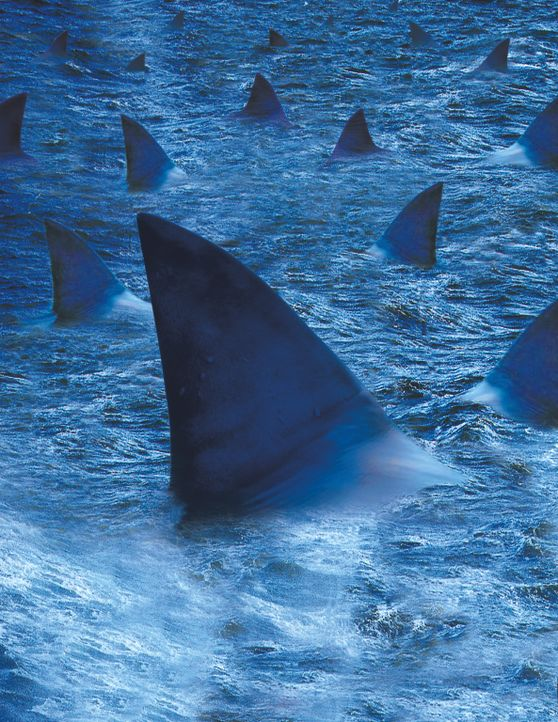 Raging Sharks - Artwork - Bildquelle: 2004 Sharky Productions A.V.V.  All Rights Reserved.