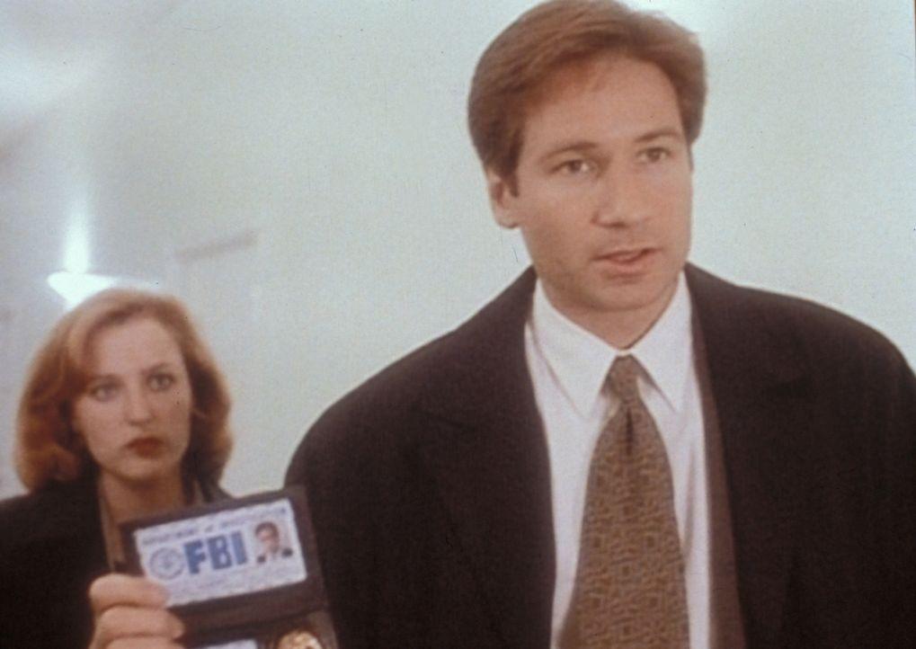 Scully (Gillian Anderson, l.) und Mulder (David Duchovny, r.) sind einem  Serienmörder auf der Spur, der seinen Opfern das Körperfett absaugt. - Bildquelle: TM +   2000 Twentieth Century Fox Film Corporation. All Rights Reserved.