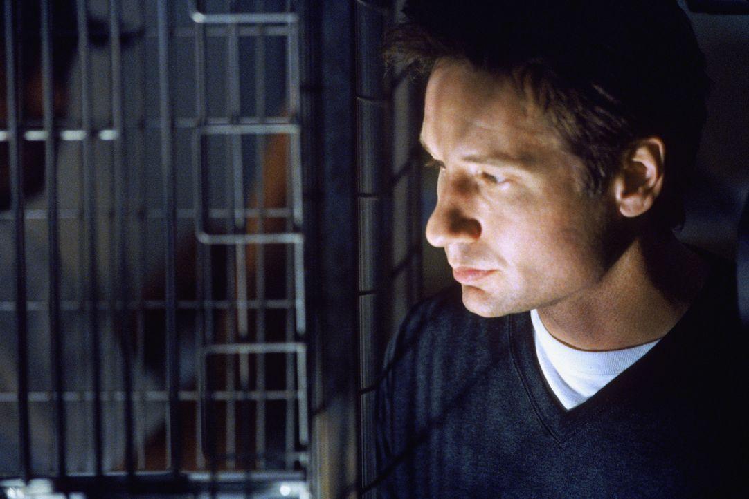 Wird gemeinsam mit seiner Kollegin auf einen neuen Fall angesetzt: Mulder (David Duchovny) ... - Bildquelle: 1998-1999 Twentieth Century Fox Film Corporation.  All rights reserved.