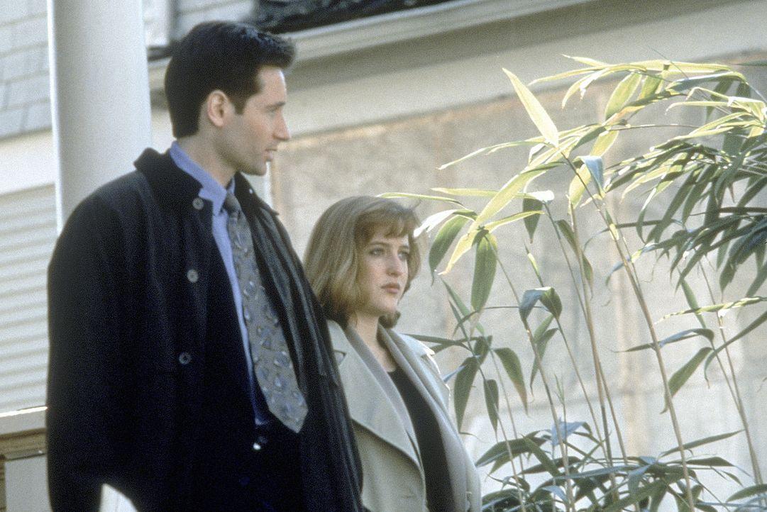 (2. Staffel) - Während die FBI-Agentin und Wissenschaftlerin Scully (Gillian Anderson, r.) übernatürlichen Vorgängen mit viel Skepsis begegnet, ist... - Bildquelle: TM +   Twentieth Century Fox Film Corporation. All Rights Reserved.