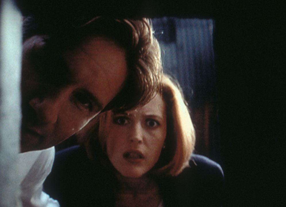 Mulder (David Duchovny, l.) und Scully (Gillian Anderson, r.) stellen fest, dass der Verdächtige über die erstaunliche Fähigkeit verfügt, sich durch... - Bildquelle: TM +   Twentieth Century Fox Film Corporation. All Rights Reserved.