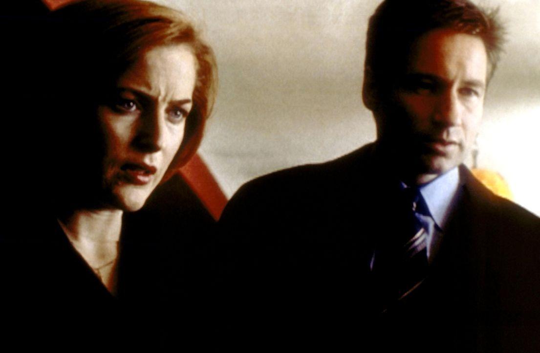 Scully (Gillian Anderson, l.) und Mulder (David Duchovny, r.) sind wieder hinter Donald Pfaster her, der jetzt aus dem Gefängnis ausgebrochen ist. - Bildquelle: TM +   2000 Twentieth Century Fox Film Corporation. All Rights Reserved.
