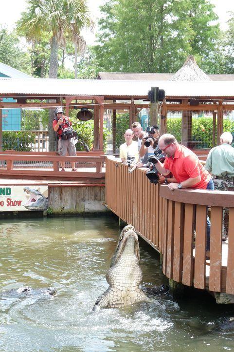 Der Reptilien-Tierpark Gatorland in Florida ist vor allem für seine Alligatoren, Krokodile und Schlangen bekannt. - Bildquelle: 2014,Great American Country/Scripps Networks, LLC. All Rights Reserved.