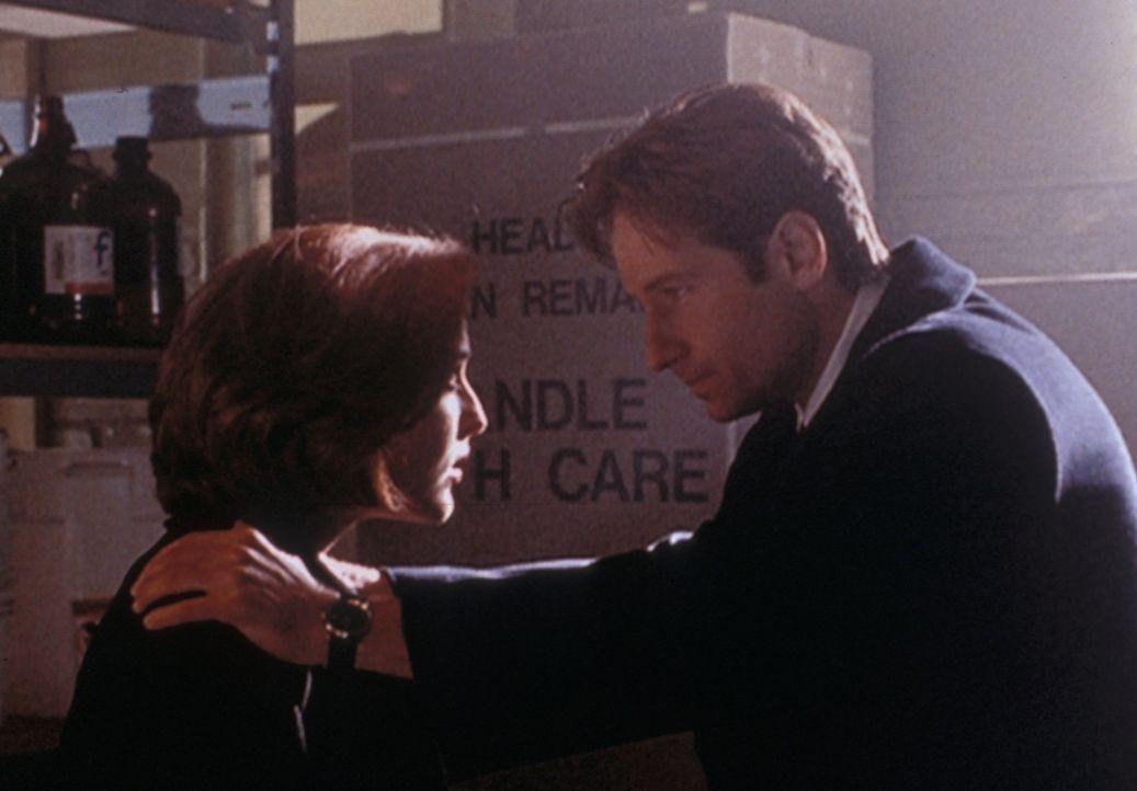 Mulder (David Duchovny, r.) will Scully (Gillian Anderson, l.) davon überzeugen, dass es auch in Texas Vampire gibt. - Bildquelle: TM +   2000 Twentieth Century Fox Film Corporation. All Rights Reserved.