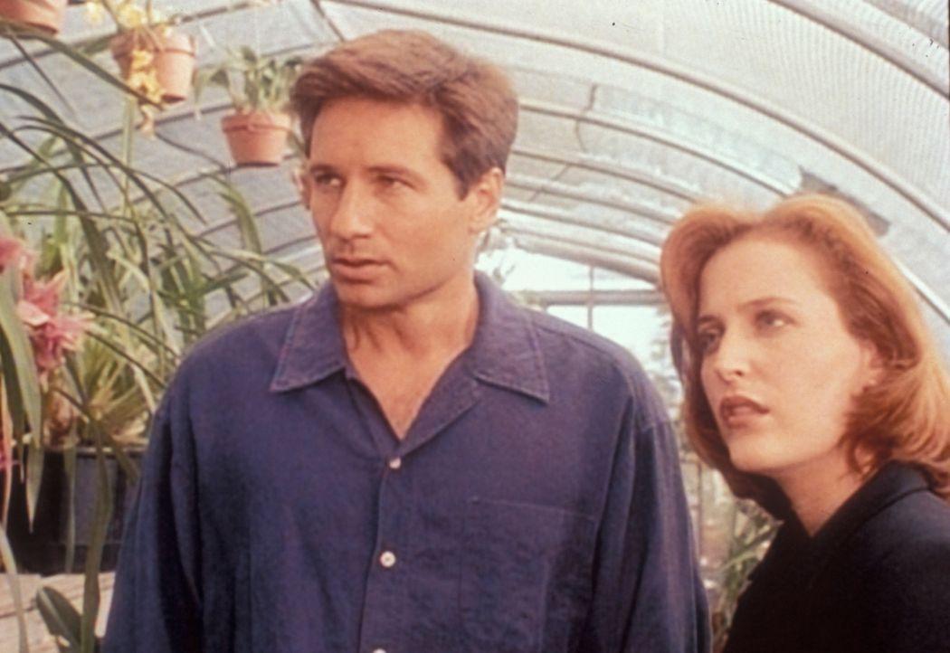 4)Dana Scully (Gillian Anderson, r.) und Fox Mulder (David Duchovny, l.) suchen einen ehemaligen Nazi-Wissenschaftler auf, um von ihm eine Erklärun... - Bildquelle: TM +   Twentieth Century Fox Film Corporation. All Rights Reserved.