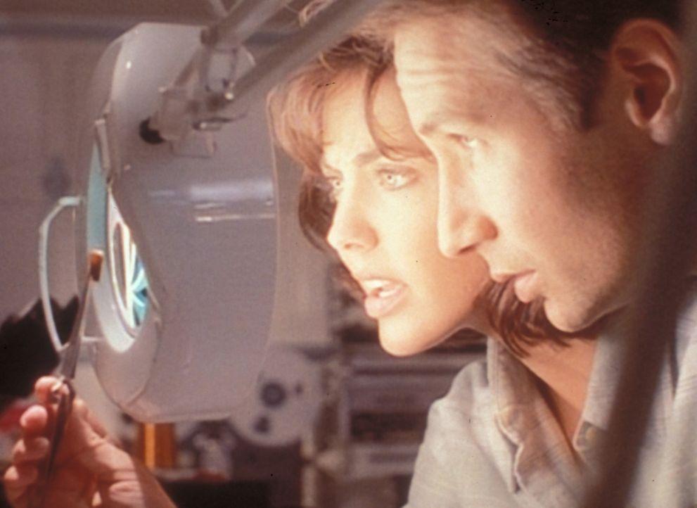 Die Entomologin Dr. Bambi Berenbaum (Bobbie Phillips, l.) erklärt Mulder (David Duchovny, r.), dass die Genitalien dieser Kakerlake einem Mikrochip... - Bildquelle: TM +   2000 Twentieth Century Fox Film Corporation. All Rights Reserved.