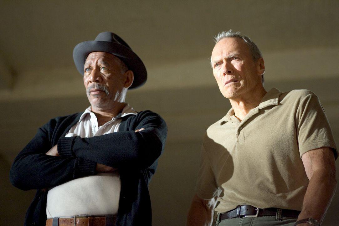 Zunächst erkennt nur Scrap (Morgan Freeman, l.), Hausmeister, Ex-Boxer und Frankies einziger Freund, Maggies Potential. Doch dann sieht auch Frank (... - Bildquelle: Epsilon Motion Pictures