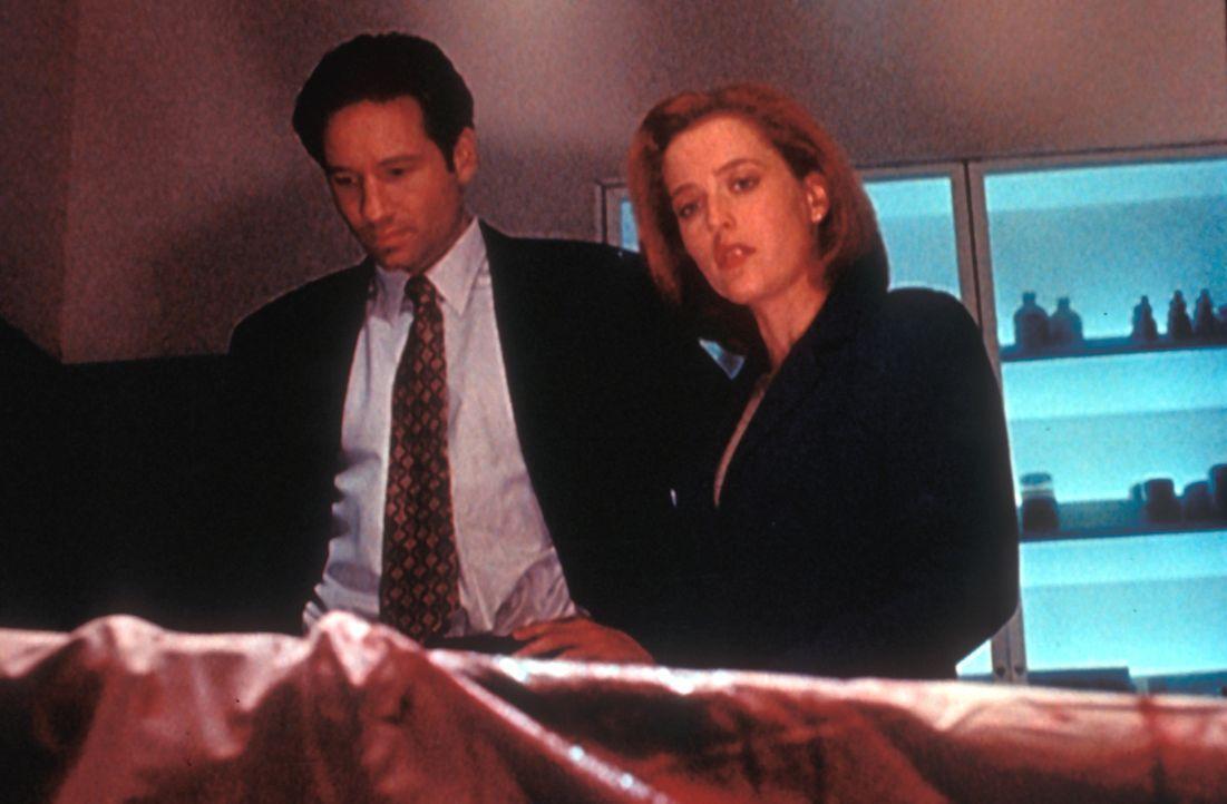Mulder (David Duchovny, l.) und Scully (Gillian Anderson, r.) untersuchen einen Fall, bei dem offensichtlich Okkultismus eine Rolle spielt. Völlig n... - Bildquelle: TM +   Twentieth Century Fox Film Corporation. All Rights Reserved.