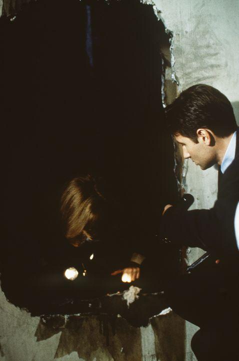 Der Täter scheint alle 30 Jahre zuzuschlagen - er bringt seine Opfer um und entfernt ihnen die Leber. Scully (Gillian Anderson, l.) und Mulder (Davi... - Bildquelle: TM +   Twentieth Century Fox Film Corporation. All Rights Reserved.