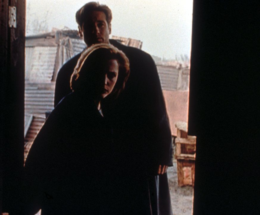 Scully (Gillian Anderson, vorne) und Mulder (David Duchovny, hinten) entdecken in einem Lager für mexikanische Wanderarbeiter die Relikte eines Natu... - Bildquelle: TM +   2000 Twentieth Century Fox Film Corporation. All Rights Reserved.