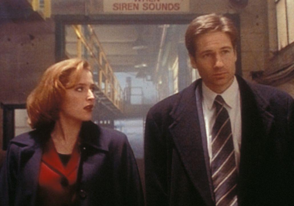 Scully (Gillian Anderson, l.) und Mulder (David Duchovny, r.) haben einen Serienmörder im Gefängnis verhört, der behauptet, von einem bösen Geist be... - Bildquelle: TM +   2000 Twentieth Century Fox Film Corporation. All Rights Reserved.