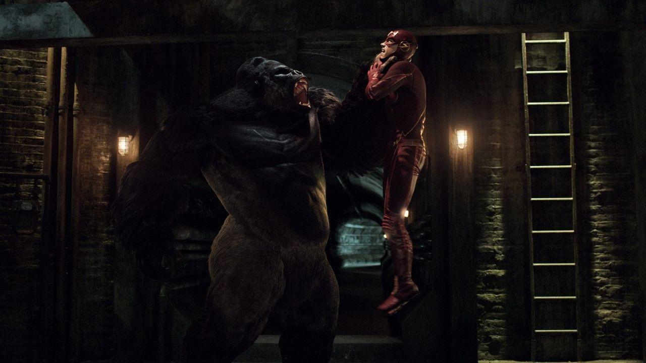 Hat Barry alias The Flash (Grant Gustin) überhaupt eine Chance gegen einen ganz besonders talentierten Gorilla? - Bildquelle: Warner Brothers.