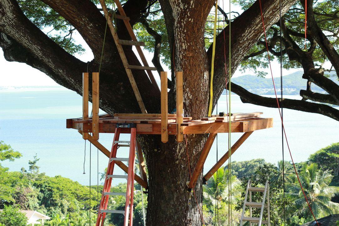 Für den Bau des Baumhauses verwenden die Treehouse Guys ausschließlich auf der Insel zusammengesammelte Materialien ... - Bildquelle: 2014, DIY Network/Scripps Networks, LLC. All RIghts Reserved.