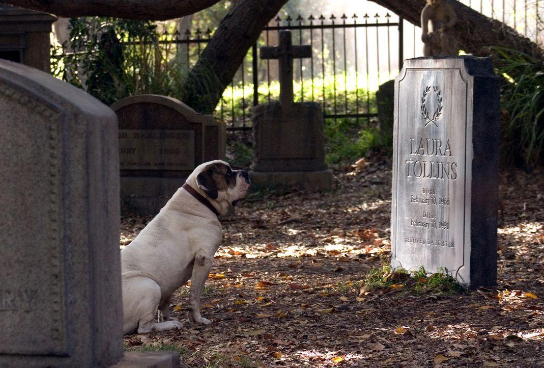 Als Walter den widerspenstigen Hund auf der Strasse entdeckt, verfolgt er ihn bis zu einem Friedhof, wo dieser sich neben einem Grab niederlässt. Vo... - Bildquelle: 2007 Warner Brothers