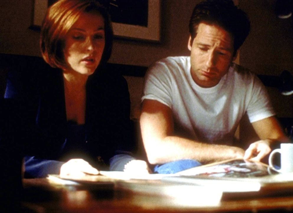 Scully (Gillian Anderson) und Mulder (David Duchovny, r.), die gerade die Autopsieberichte einer Mordserie studieren, merken nicht, dass sie dabei v... - Bildquelle: TM +   2000 Twentieth Century Fox Film Corporation. All Rights Reserved.