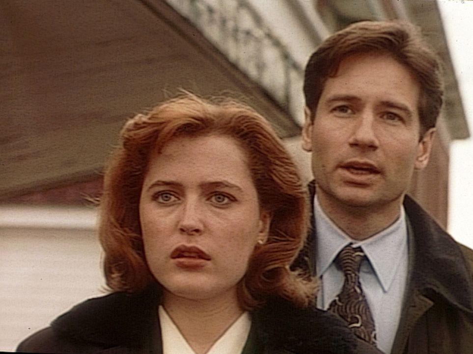 Mulder (David Duchovny, r.) und Scully (Gillian Anderson, l.) ermitteln in einer rätselhaften Mordserie: Die Opfer, sowohl Männer als auch Frauen,... - Bildquelle: TM +   2000 Twentieth Century Fox Film Corporation. All Rights Reserved.