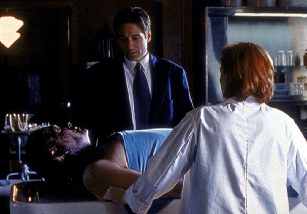 Bei der Autopsie von Phil Rich (Bob Dawson) stellen Scully (Gillian Anderson, r.) und Mulder (David Duchovny, M.) fest, dass dieser im Schlamm ersti... - Bildquelle: TM +   2000 Twentieth Century Fox Film Corporation. All Rights Reserved.