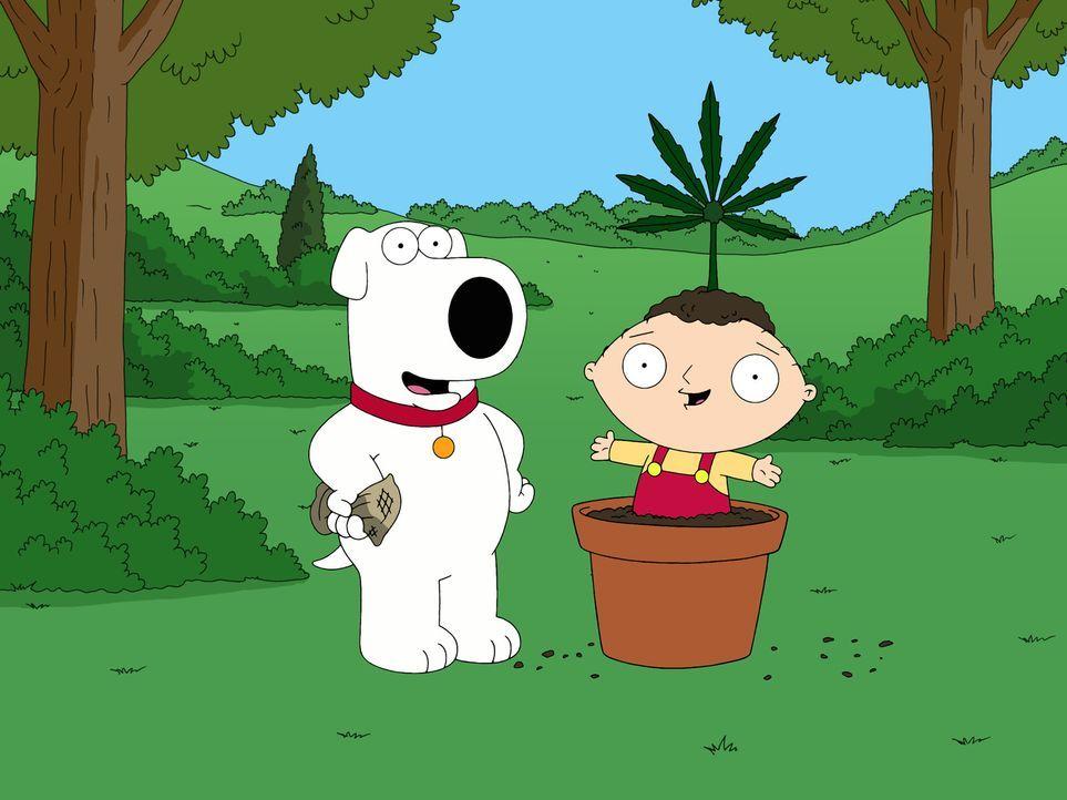 Als Brian (l.) wegen des Besitzes einer Kleinstmenge Marihuana verhaftet und eingesperrt wird, startet er nach seiner Entlassung aus dem Knast eine... - Bildquelle: 2006-2007 Twentieth Century Fox Film Corporation. All rights reserved.
