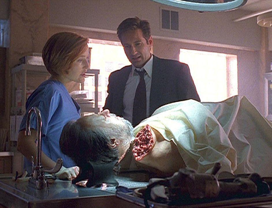 Scully (Gillian Anderson, l.) und Mulder (David Duchovny, r.) betrachten die Leiche des großen Zauberers Maleeni (Ricky Ray, liegend). - Bildquelle: TM +   2000 Twentieth Century Fox Film Corporation. All Rights Reserved.