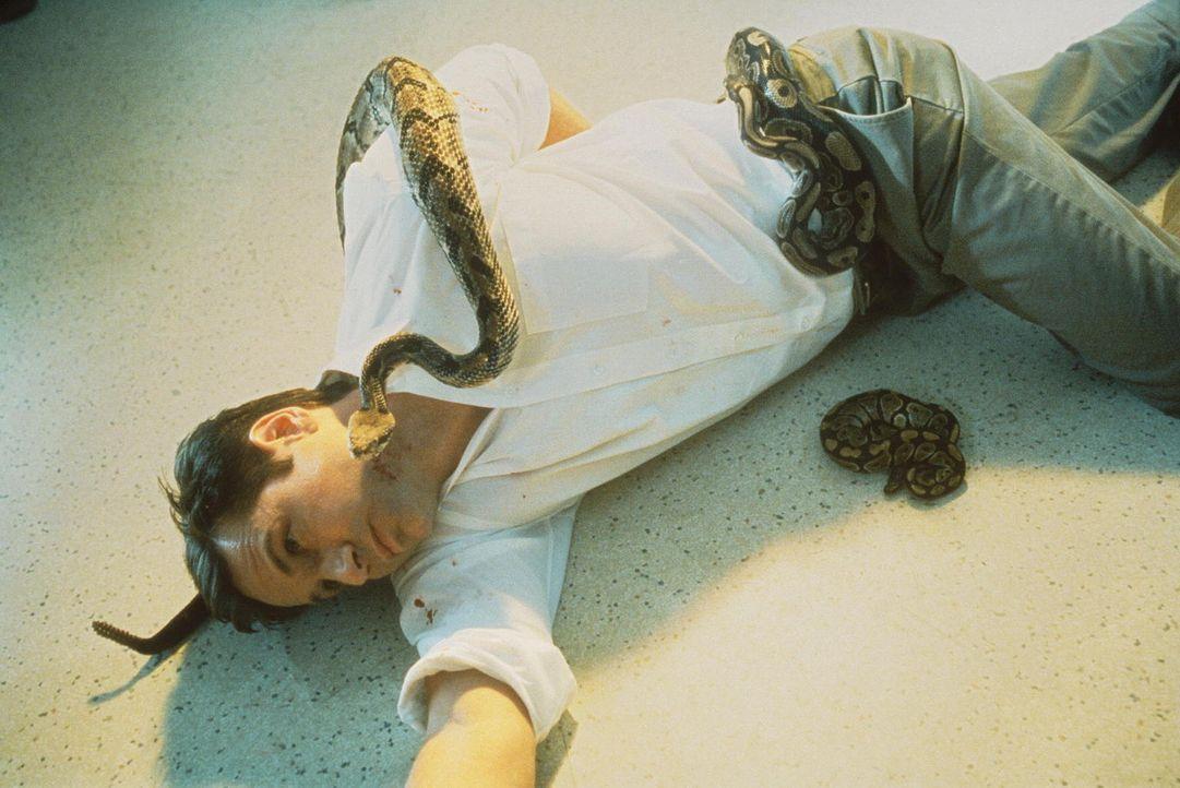 Ein junger Mann stirbt an zahlreichen Klapperschlangenbissen. Mulder (David Duchovny), der mit Scully den Fall übernimmt, steckt schon bald in einer... - Bildquelle: TM +   2000 Twentieth Century Fox Film Corporation. All Rights Reserved.