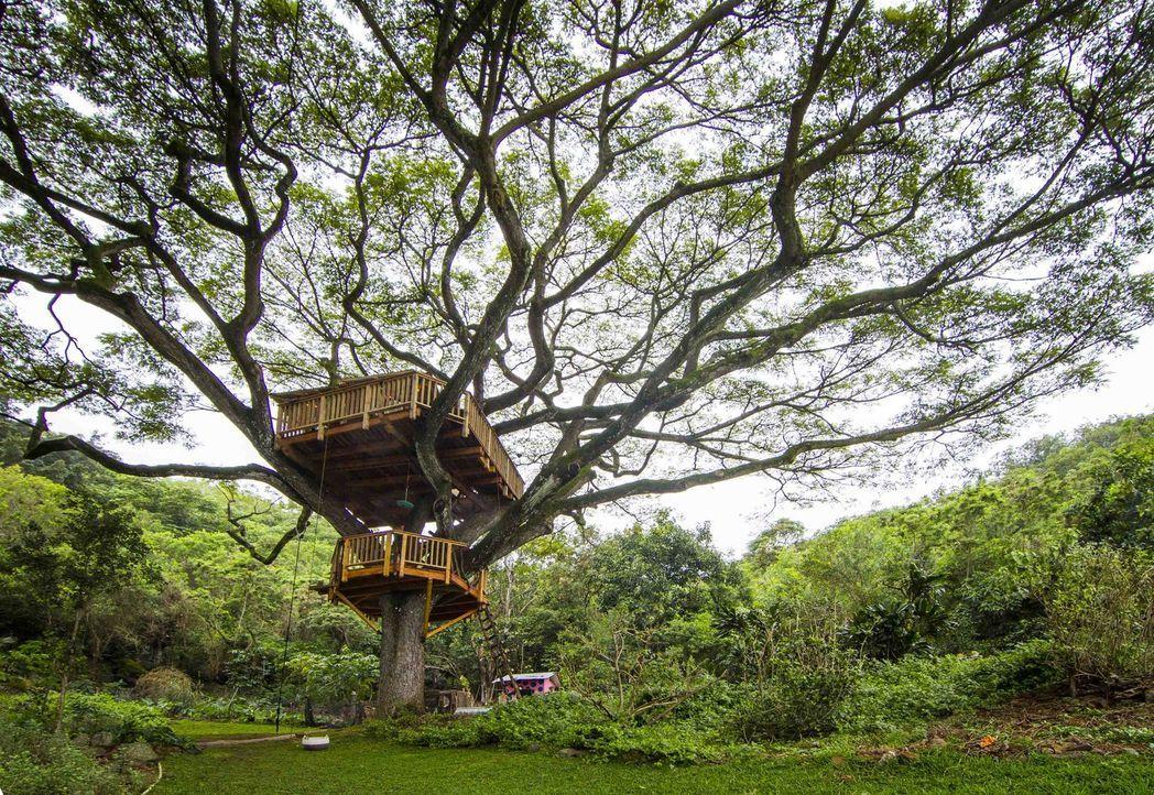 Ein Baumhaus-Traum geht in Erfüllung: Die Treehouse Guys erschaffen in Oahu, Hawaii, ein Baumhaus in einem äußerst beeindruckenden Regenbaum ... - Bildquelle: 2014, DIY Network/Scripps Networks, LLC. All RIghts Reserved.