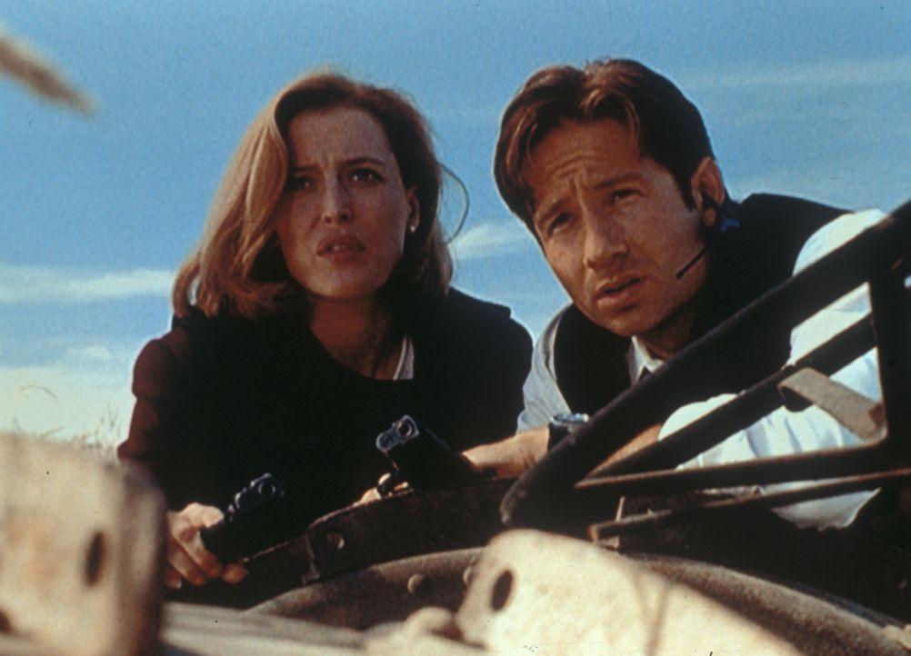 Scully (Gillian Anderson, l.) und Mulder (David Duchovny, r.) beobachten das Haus der Peacock Familie, die unter Verdacht steht, ein Baby gleich nac... - Bildquelle: TM +   2000 Twentieth Century Fox Film Corporation. All Rights Reserved.