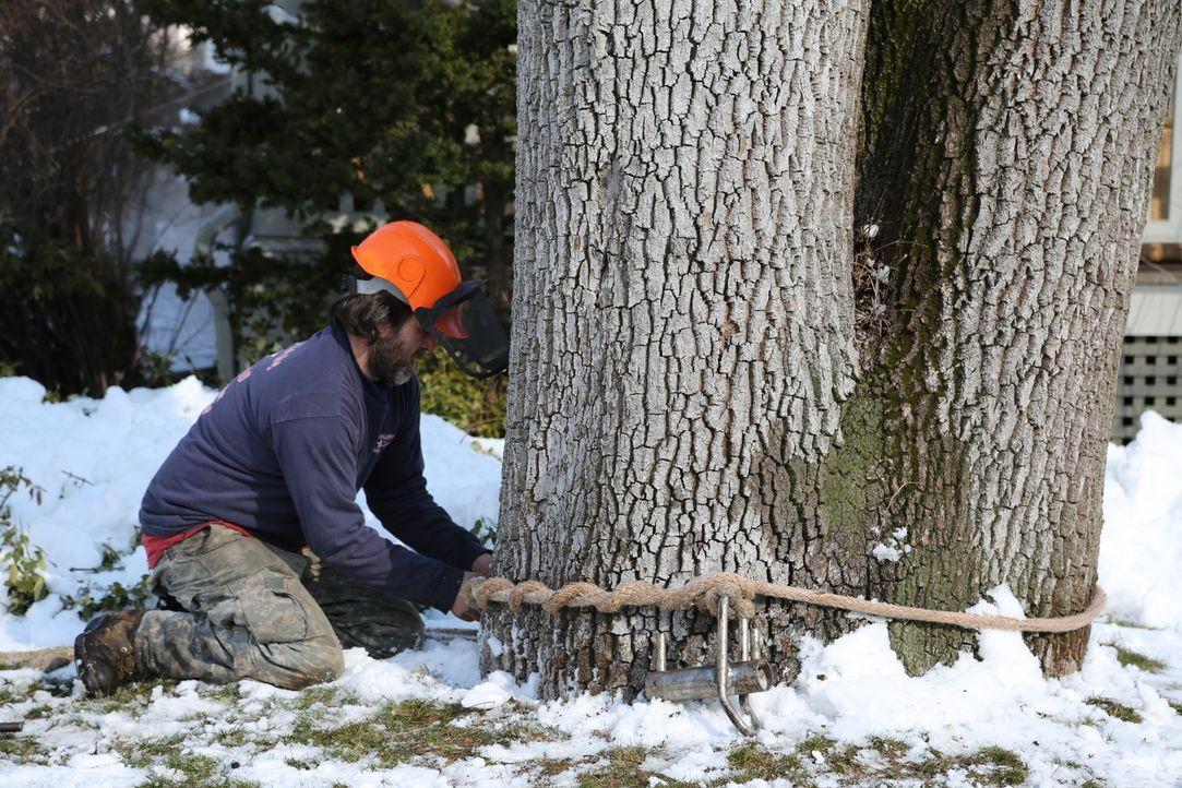 """Die Baumfäller der """"American Climbers"""" sind die Cowboys der Branche. Sie machen die Jobs, die kein anderer machen will, denn: Der Job ist alles ande... - Bildquelle: National Geographic"""