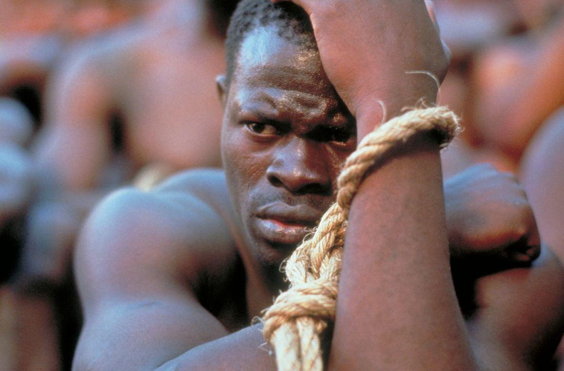Cinqué (Djimon Hounsou) wurde in seiner Heimat Afrika gefangen genommen und soll in Amerika als Sklave verkauft werden... - Bildquelle: DreamWorks Distribution LLC