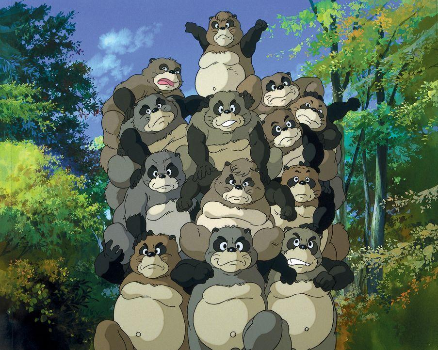 Pom Poko - Bildquelle: Wild Bunch