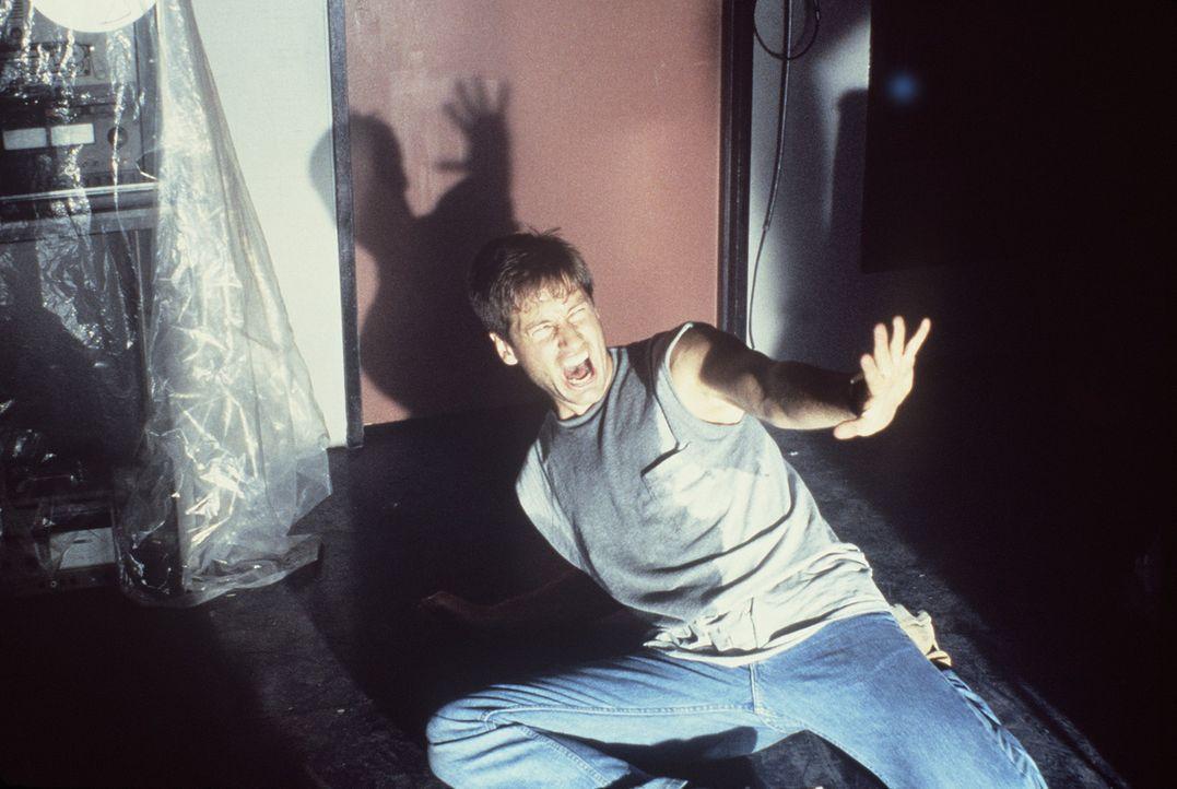 (1. Staffel) - Die X-Akten: Hier werden Fälle gesammelt, in denen paranormale Phänomene eine Rolle spielen, die nicht erklärt werden können. FBI... - Bildquelle: TM +   Twentieth Century Fox Film Corporation. All Rights Reserved.