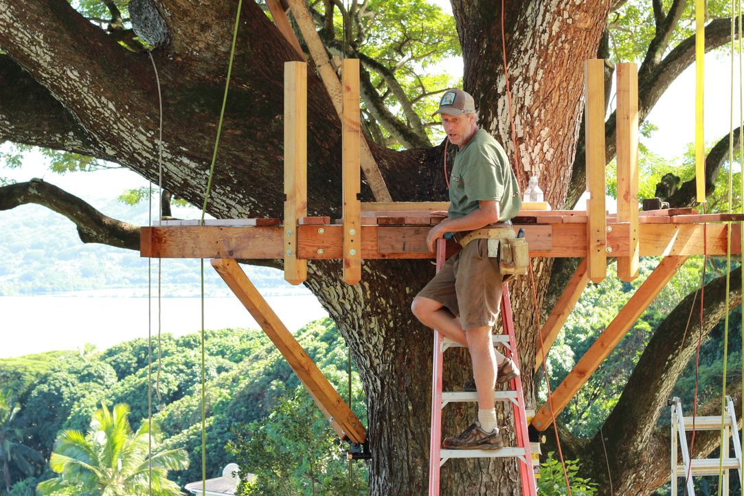 """Für Treehouse Guy James """"B'fer"""" Roth (Foto) ist kein Projekt zu kompliziert: Die Baumhaus-Profis sollen in einem äußerst beeindruckenden Regenbaum e... - Bildquelle: 2014, DIY Network/Scripps Networks, LLC. All RIghts Reserved."""