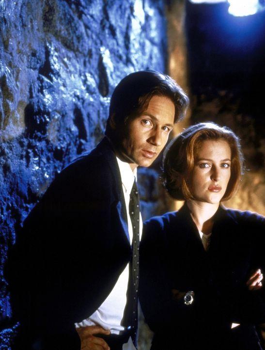 (7. Staffel) - Mit der Aufklärung ungewöhnlicher Ereignisse sind die FBI-Agenten Fox Mulder (David Duchovny, l.) und Dana Scully (Gillian Anderson,... - Bildquelle: TM +   2000 Twentieth Century Fox Film Corporation. All Rights Reserved.
