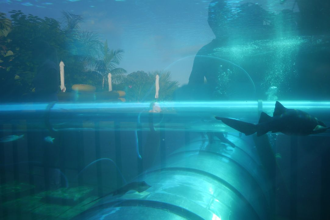 Highlight im Siam Park in Costa Adeje auf Teneriffa: eine Wasserrutsche, die durch ein Gewässer voller Haie führt ... - Bildquelle: 2016, The Travel Channel, L.L.C. All Rights Reserved.