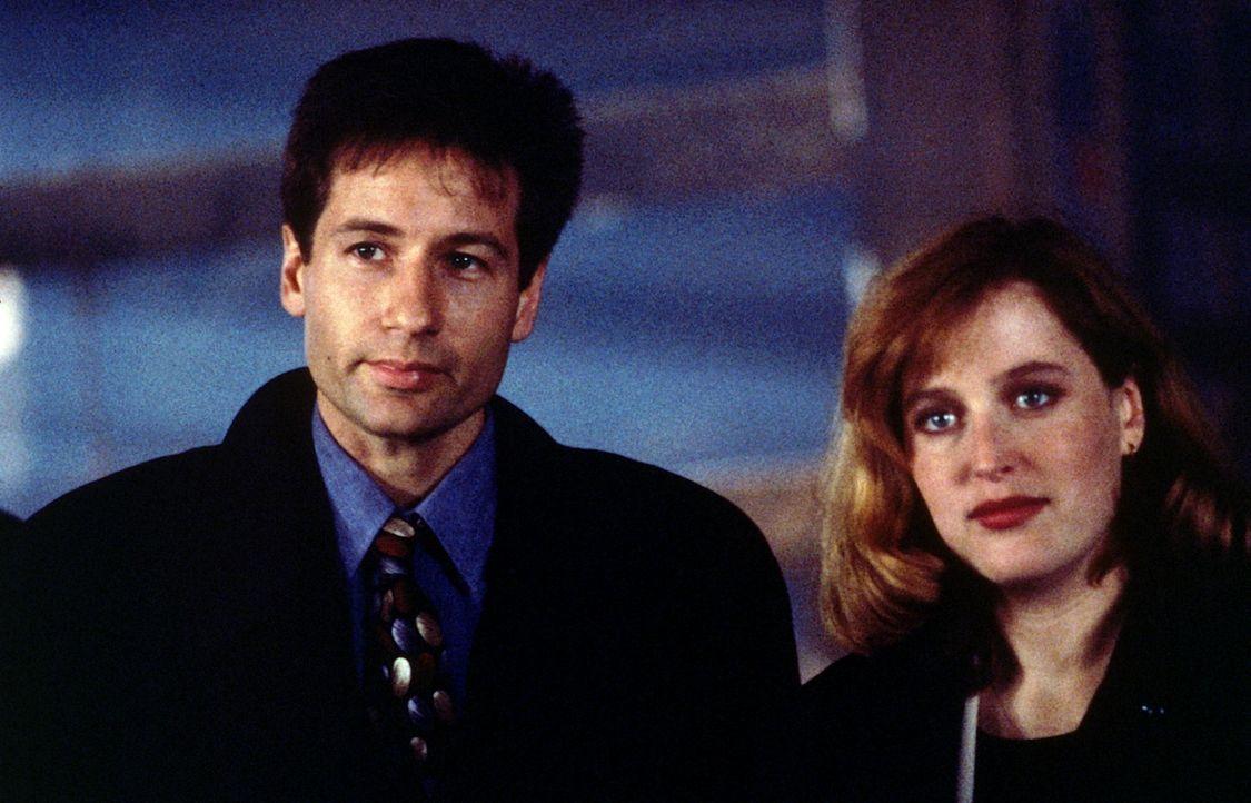 Mulder (David Duchovny, l.) und Scully (Gillian Anderson, r.) werden in Wisconsin mit einer Sekte konfrontiert, die als Vegetarier im Land der Viehz... - Bildquelle: TM +   Twentieth Century Fox Film Corporation. All Rights Reserved.