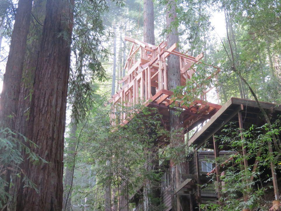 Dieses Mal legen die Treehouse Guys in den Bäumen Guernevilles Hand an. Die massiven Rothölzer bieten perfekte Möglichkeiten, um einer vierköpfigen... - Bildquelle: 2016,DIY Network/Scripps Networks, LLC. All Rights Reserved.