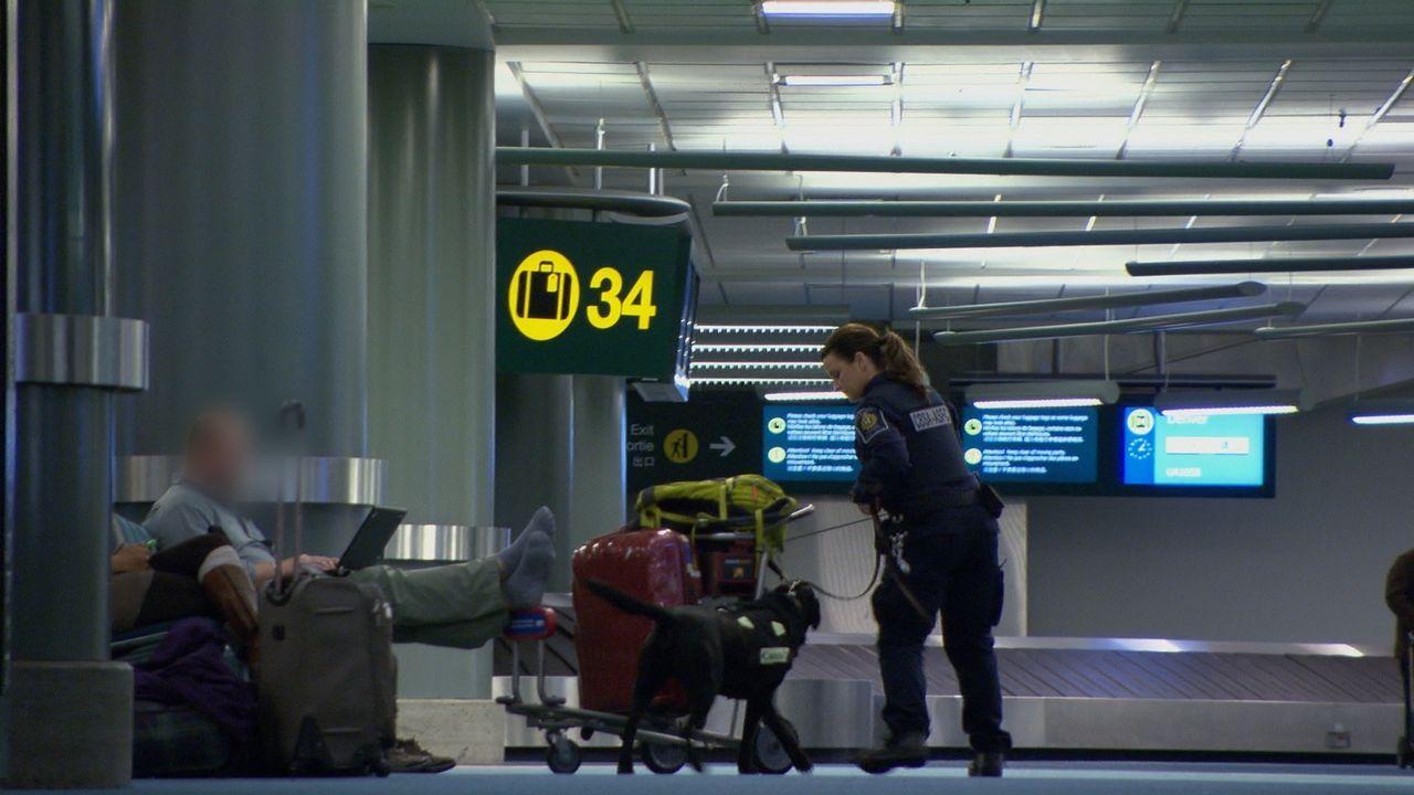 Schmuggler lassen sich ziemlich originelle Verstecke für ihr Schmuggelgut einfallen, aber die Zollbeamten kommen ihnen fast immer auf die Spur. - Bildquelle: Force Four Entertainment / BST Media 2 Inc.
