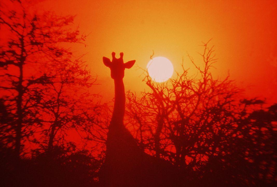 In einmaligen Aufnahmen werden nicht nur traumhafte Landschaften, sondern auch die wahrhaft lustige Welt der Tiere gezeigt ... - Bildquelle: Warner Bros. Pictures