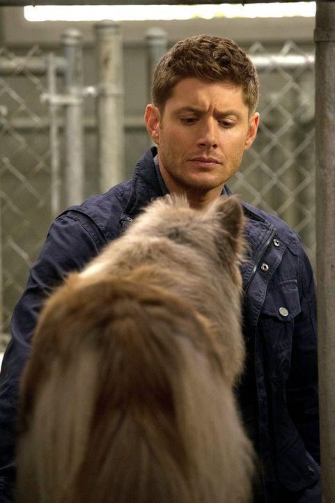 Ein seltsamer Zeuge: Dean (Jensen Ackles) muss es irgendwie schaffen mit einem deutschen Schäferhund zu kommunizieren, denn der hat den Mord an zwei... - Bildquelle: 2013 Warner Brothers