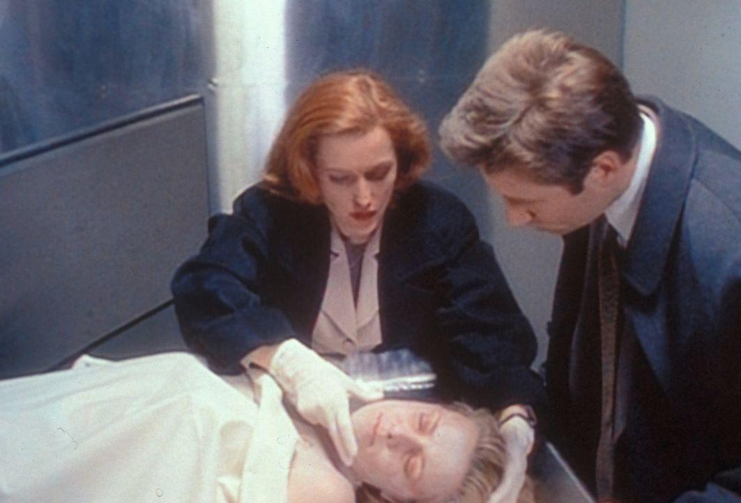 Scully (Gillian Anderson, l.) will Mulder (David Duchovny, r.) eine Phosphoressenz um Mund und Nase einer ermordeten Prostituierten zeigen, die sie... - Bildquelle: TM +   2000 Twentieth Century Fox Film Corporation. All Rights Reserved.