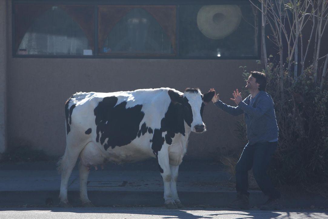 Phil (Will Forte) überrascht die anderen mit einer Kuh, doch dann gelingt es ihm mal wieder, mit einem Satz die neu erworbene Zuneigung zu zerstören... - Bildquelle: 2015 Fox and its related entities.  All rights reserved.