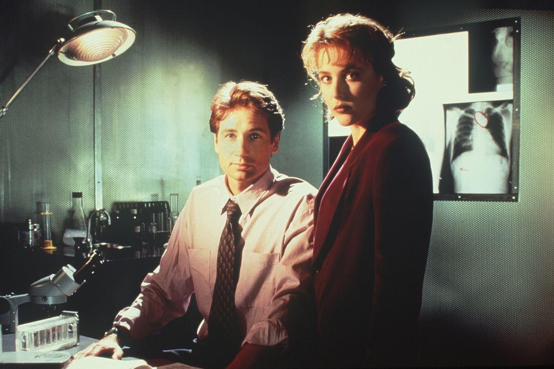 (1. Staffel) - Während die FBI-Agentin und Wissenschaftlerin Scully (Gillian Anderson, r.) übernatürlichen Vorgängen mit viel Skepsis begegnet, ist... - Bildquelle: TM +   Twentieth Century Fox Film Corporation. All Rights Reserved.