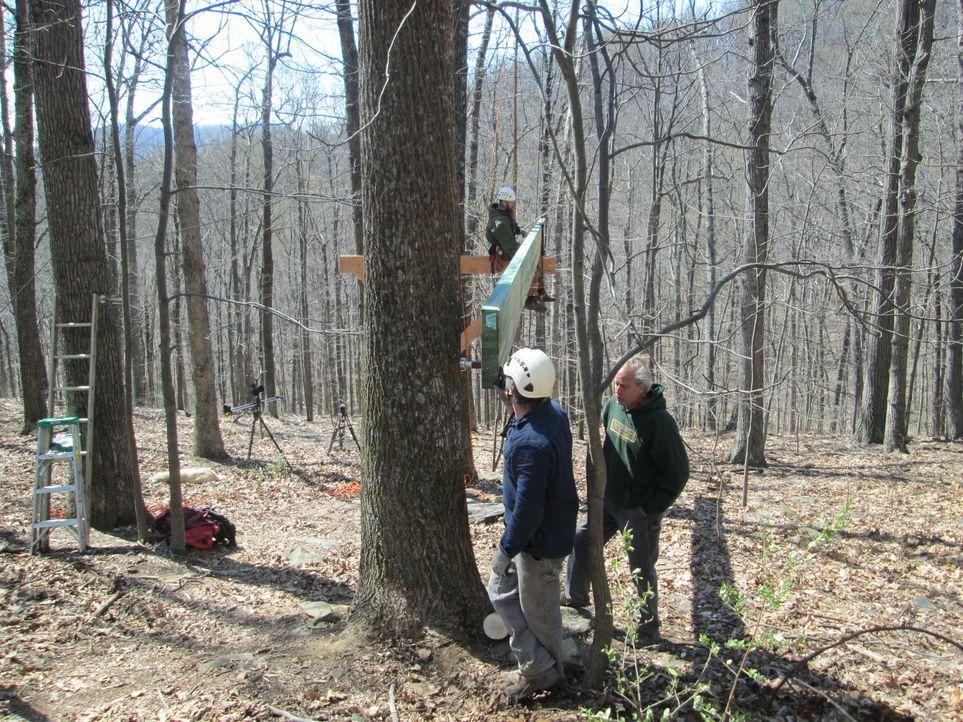 Für die Treehouse Guys steht in Linden, Virginia ein neues, außergewöhnliches Projekt an: Eine Baumhaus-Apotheke in den Baumkronen roter Eichen. Wir... - Bildquelle: 2016,DIY Network/Scripps Networks, LLC. All Rights Reserved