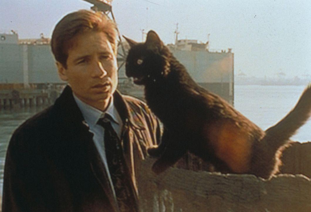 Mulder (David Duchovny), der eben noch einen haitianischen Jungen verfolgt hat, sieht sich plötzlich einer schwarzen Katze gegenüber - Voodoo-Zauber... - Bildquelle: TM +   Twentieth Century Fox Film Corporation. All Rights Reserved.